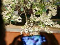 北京智化寺开放清明赏花夜场