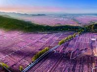用光影定格盛世桃花 北京举办庆祝建党百年摄影展