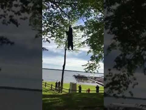 """视频:美国""""熊孩子""""将黑熊逼到20米高树上 消防"""