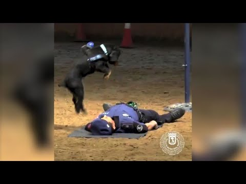 Dog performs CPR skill to
