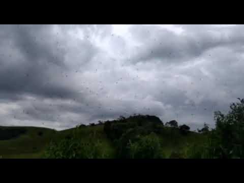 视频:密恐慎点!上千只蜘蛛在天空中结出一道网