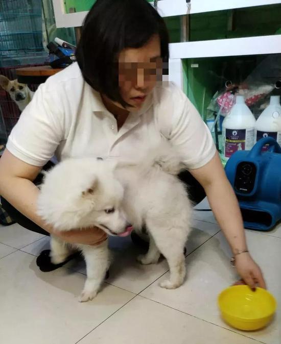 """""""菲妥妥""""的狗在宠物店里。实习生张一川摄"""