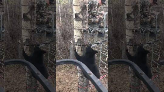视频:黑熊爬上树来 14岁捕猎少年表现淡定捡回一