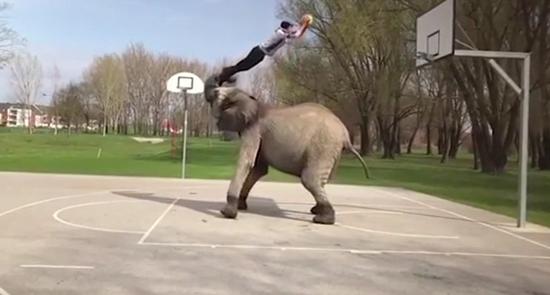 视频:马戏团艺人与大象合作天衣无缝 上演超完美灌