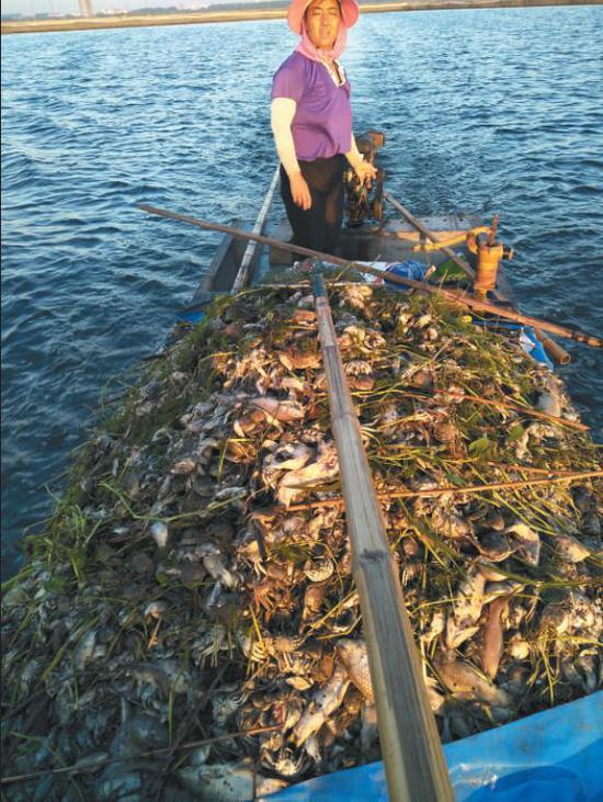 ▲8月27日,渔民在湖里打捞死鱼蟹。湖水呈黑色。