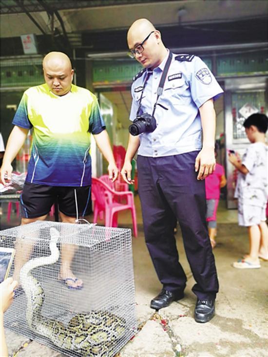蟒蛇再次被捉进牢笼南国都市报 图