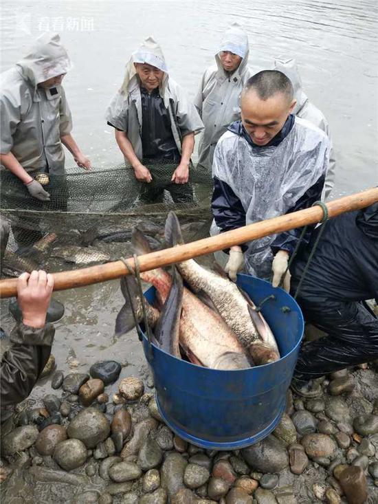 暴雨天大家都在躲雨 这所大学却忙着在湖中捞鱼铁血壮士电视剧