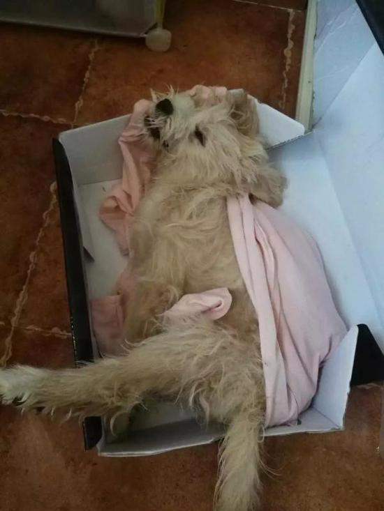刘先生家遇害的狗狗
