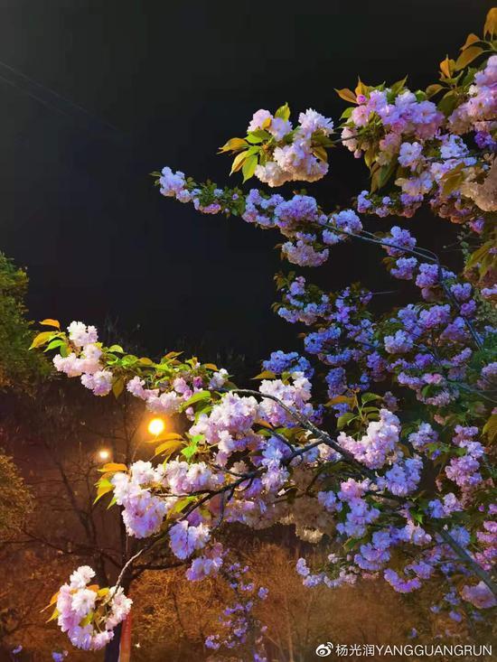 诗歌随笔:放学 钢琴 晨光 春酒 西江月•泥雨