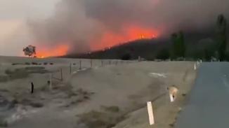 澳大利亚新南威尔士州这场大火终被熄灭