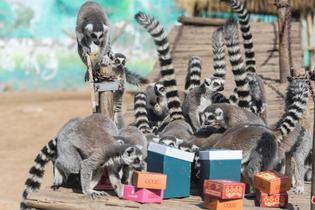 動物享用年飯大餐