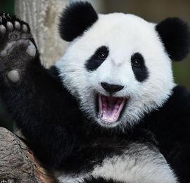 世界微笑日 动物露迷人笑容超治愈