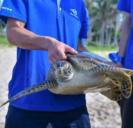 世界海龟日 37只海龟在三亚回归大海