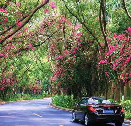"""森呼吸!深圳这座高颜值的森林之城简直""""美爆""""了"""