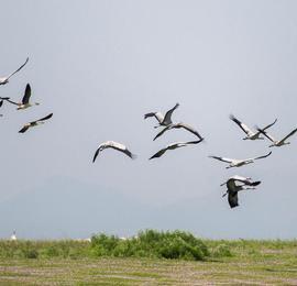 当越冬候鸟遇上蓼子花海 快来一睹秋天的鄱阳湖湿地美景