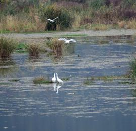 杭州:野生鸟类的天堂