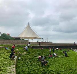 烟台一海边台风刮上来成片海菜 引许多市民捡拾