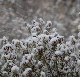 """中国""""最北城市""""下雪了"""