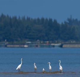 海南儋州:光村银滩候鸟飞