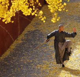 美得宛如穿越!嵩山少林寺的银杏叶黄了,你心动了吗?