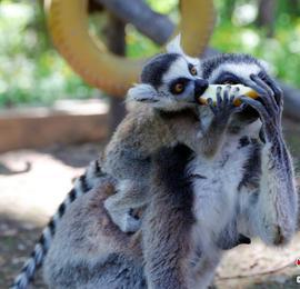 哈尔滨北方森林动物园动物宝宝集中亮相