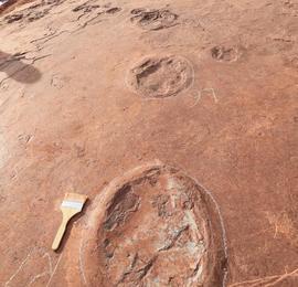 福建上杭科考新增发现恐龙足迹化石364枚