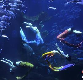 """贵州贵阳:水下""""美人鱼""""舞姿引游客"""
