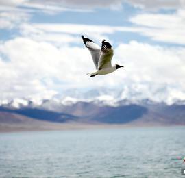 西藏纳木错迎来旅游旺季