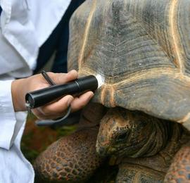 云南野生动物园为象龟体检
