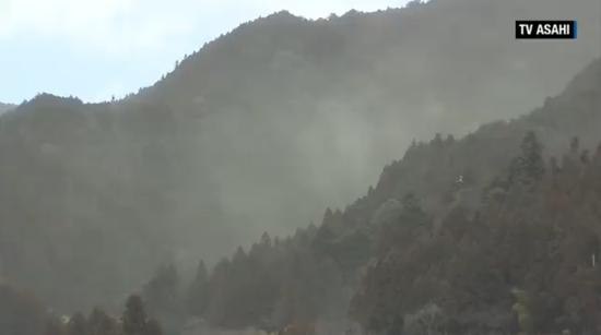 东京区域花粉高产的树木(图源:CNN新闻)