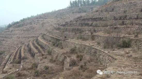 ▲埋尸地点已于2014年被改造为梯田,山体发生很大变化。警方供图
