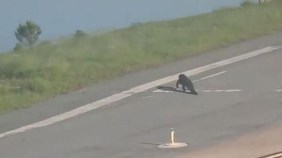 视频:美国一飞机跑道惊现鳄鱼 逼停了一架刚降落的