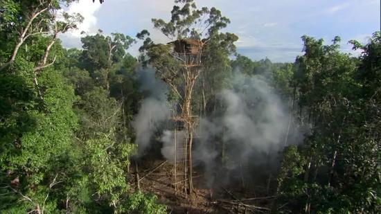 ▲BBC承认纪录片《人类星球》中的树屋造假。