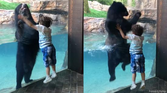 视频:可爱!小熊模仿小孩蹦蹦跳跳