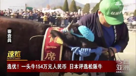 视频| 一头牛154万元人民币 日本评选松阪牛