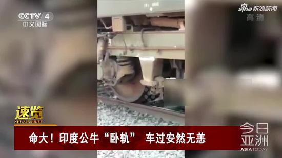 视频|命大!印度公牛卧轨 车过安然无恙