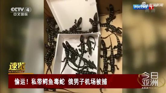 视频|私带鳄鱼毒蛇 俄男子机场被捕