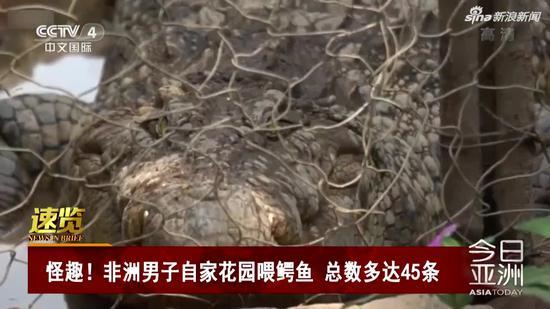 视频|非洲男子自家花园喂鳄鱼 总数多达45条