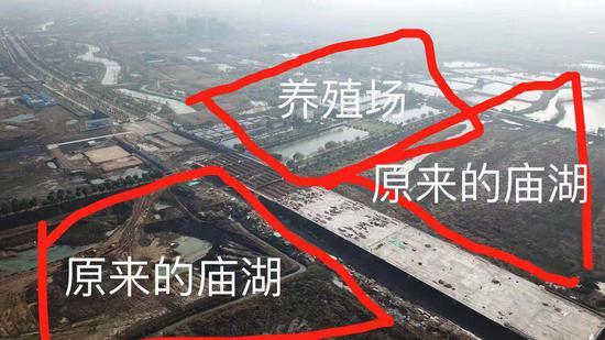 ▲施工中的月桥从养殖基地穿过。新京报记者 逯仲胜 摄