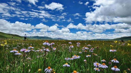 玉树巴塘草原 资料图| 图片来源于网络
