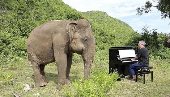 英国钢琴家为大象奏乐 失明大象随乐起舞(图)