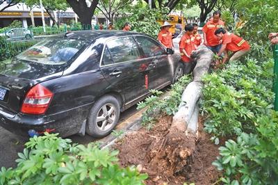 """昨日,""""白鹿""""带来的大风和暴雨,造成厦门街头部分树木折断倒伏。图/视觉中国"""