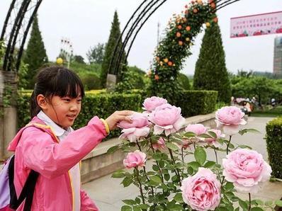 想看北京最美月季?必须去这12处观赏点!