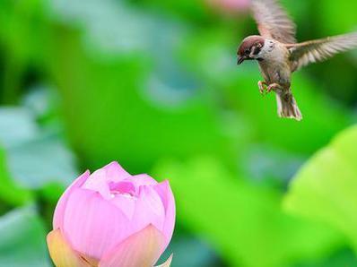 北京:夏日公园里的小精灵