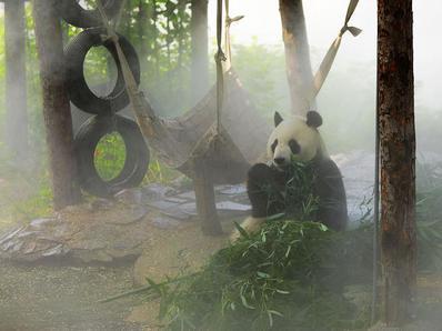 北京连续桑拿天 动物园为动物宝宝送凉爽防暑降温
