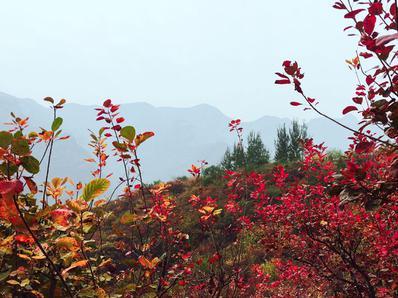 美丽北京好去处|房山区周口店红叶进入最佳观赏期
