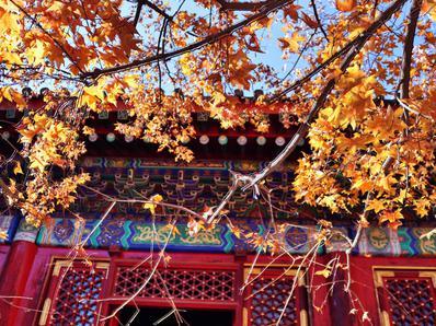 一年好景君莫辜负,北京香山红叶进入最佳观赏期