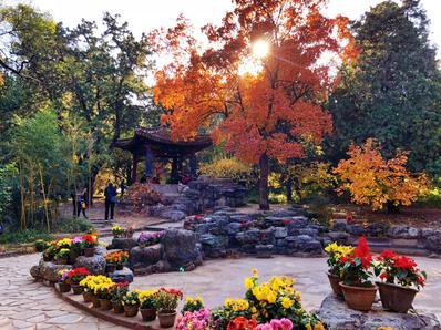 北京香山的红叶惊艳了全国各地游客