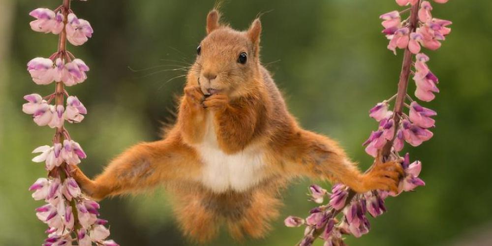 2018年喜剧野生动物摄影大赛入围作品