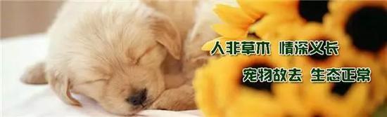 ▲某宠物殡葬服务公司打出的标语。